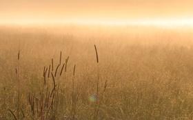 Картинка трава, природа, туман, утро, солнца