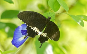 Обои цветок, листья, бабочка