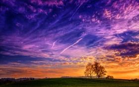 Обои облака, деревья, Небо