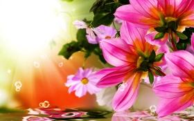 Обои коллаж, отражение, вода, лепестки, цветы