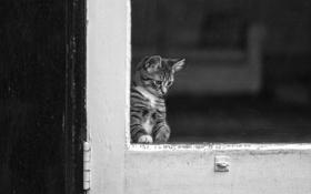 Обои глаза, кот, стекло, окно