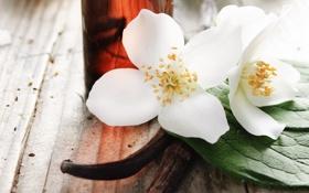 Обои цветы, лепестки, spa