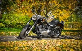 Обои Special, Harley-Davidson, Fat Boy
