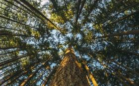 Обои листья, ствол, крона, небо, дерево