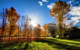 Картинка трава, солнце, деревья, Новая Зеландия, grass, sunshine, trees