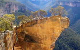 Картинка лес, деревья, горы, природа, скала, обрыв, склон