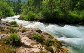 Обои лес, река, камни, растительность, мох