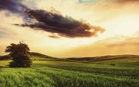 Обои поле, небо, облако