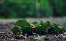 Картинка листья, зеленый, асфальт