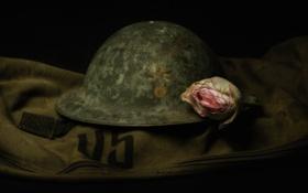 Обои цветок, фон, каска, армейская