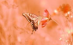 Обои природа, бабочка, цветы, лето