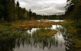 Картинка лес, лето, небо, вода, природа, болото, горизонт