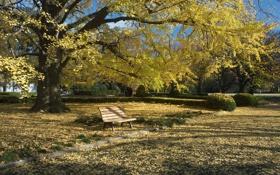 Картинка осень, трава, листья, парк, дерево, скамья