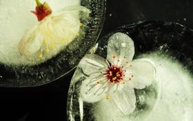 Картинка лед, вода, цветы