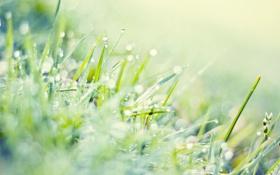 Картинка зелень, трава, капли, макро, свет, блики, газон