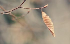 Картинка макро, лист, ветка, сухой