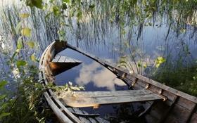 Картинка трава, вода, ветки, озеро, пруд, дерево, лодка