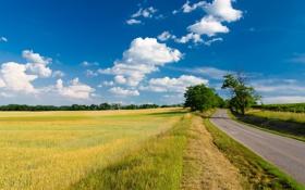 Картинка облака, трава, небо, лето, поле, забор, деревья