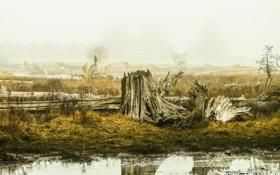 Картинка пейзаж, природа, болото