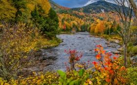 Обои лес, река, куст, осень, листья, деревья, природа