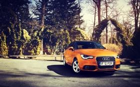 Обои Audi, Ауди, Оранжевый, Sportback