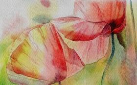 Обои цветы, рисунок, маки