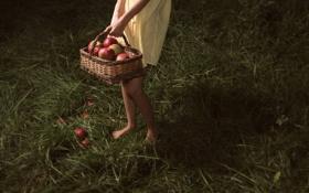 Обои яблоки, корзинка, девочка