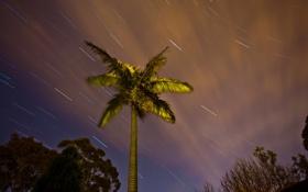 Картинка небо, ночь, дерево, звёзды