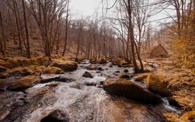 Обои река, лес, дом