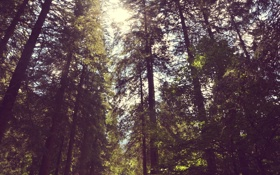 Картинка лес, лето, листья, солнце, деревья, ветки