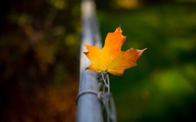 Обои осень, забор, лист