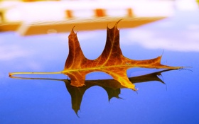 Обои осень, листья, макро, лист, жёлтый, осенние обои, листок листки