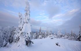 Картинка зима, лес, небо, снег