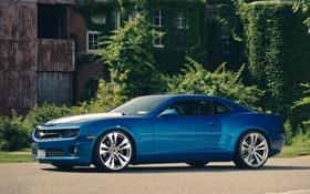 Обои деревья, синий, Chevrolet, Camaro, шевроле, blue, передняя часть