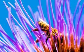 Картинка цветок, пчела, лепестки, насекомое