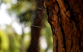 Картинка дерево, паутина, размытость, ствол