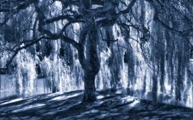 Обои свет, синий, дерево, тень