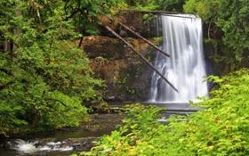 Картинка лес, деревья, скала, водопад, США, кусты, Oregon