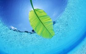 Обои вода, макро, листок