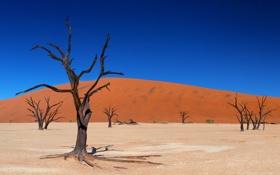 Обои песок, деревья, пустыня