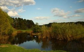 Картинка лес, небо, облака, пейзаж, природа, река, настроение