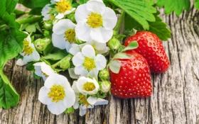 Обои ягоды, клубника, fresh berries, strawberry, цветы