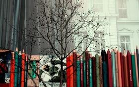 Картинка окно, карандаши, дерево