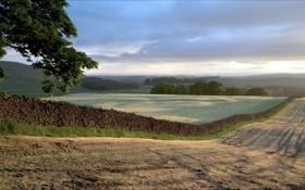 Картинка пейзаж, поле, забор, дерево