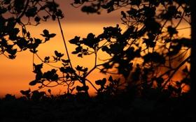 Обои небо, листья, закат, природа, ветви, тишина, растение