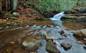 Обои листья, вода, водопад, поток, water, autumn, leaves