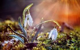 Картинка солнце, цветы, природа, дождь, весна, bokeh