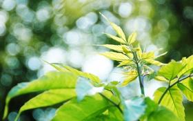 Обои фото, зелень, листья, обои, день, природа, растения