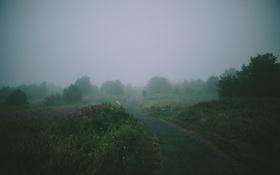 Картинка деревья, цветы, туман, путь, скамейки