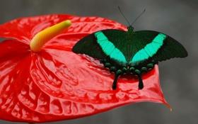 Обои цветок, узор, бабочка, крылья